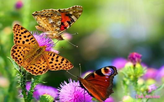 flores-e-borboletas-varias